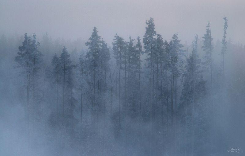 ленинградская область, туман, зима, дымка, зимний пейзаж Сонphoto preview