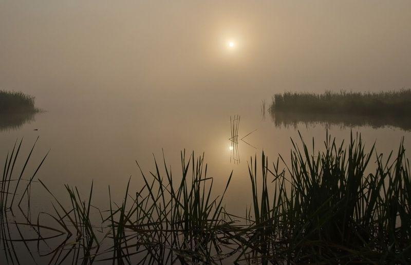 утро рассвет мелководье Утро на мелководьеphoto preview