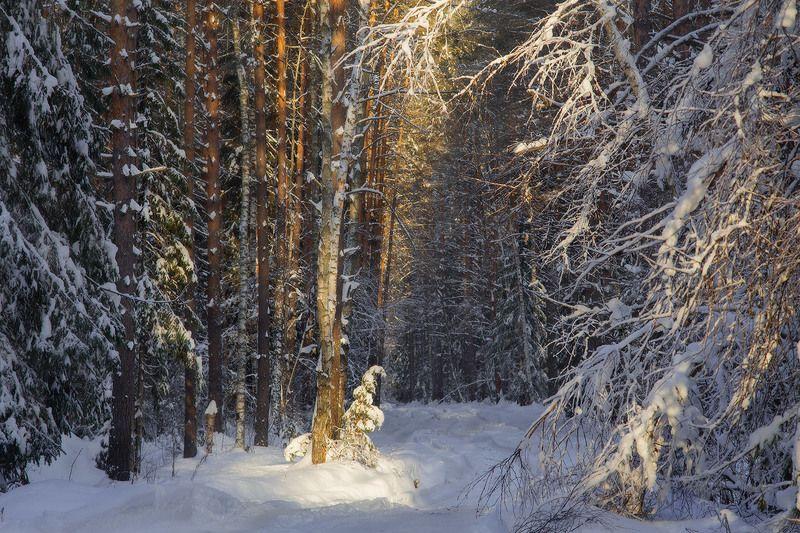 зима лес свет Зимний этюдphoto preview