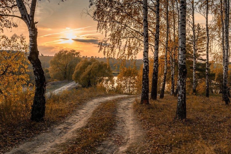 пейзаж,природа,россия,осень,золотая осень,березовая роща,дорога \