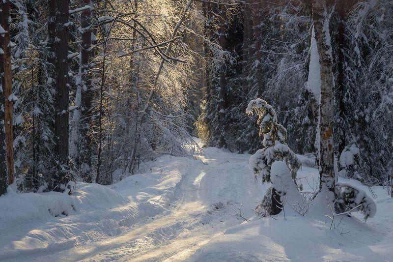 зима дорога страж Зимний стражphoto preview