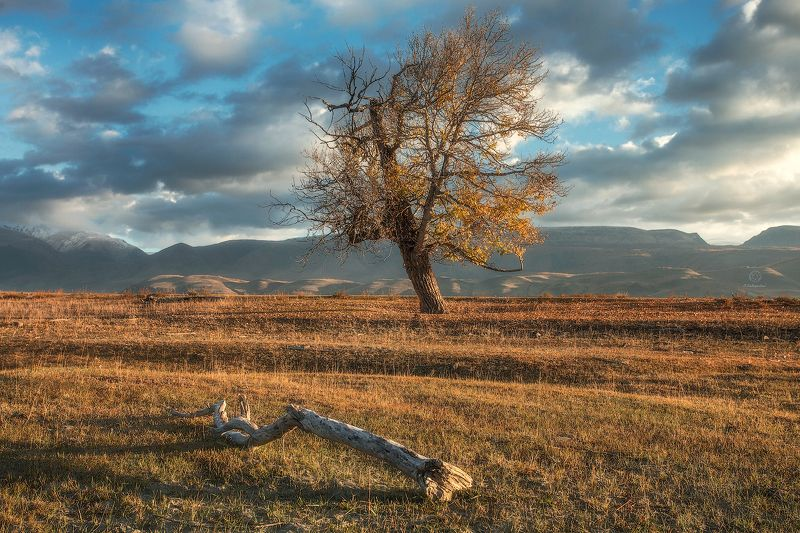 горы, рассвет, дерево Древо жизни / Altaiphoto preview