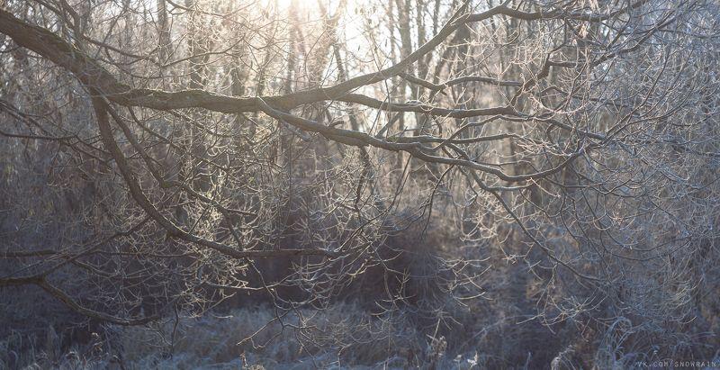 пейзаж, природа, облака, путешествия, travel, wildlife, nature, sky, landscape, sunrise, рассвет Морозное утроphoto preview