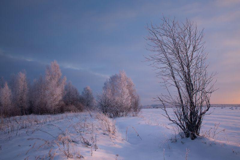 зима закат мороз иней Что-то я плохо нарядиласьphoto preview