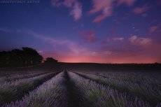Ночная лаванда (фототур в Прованс)