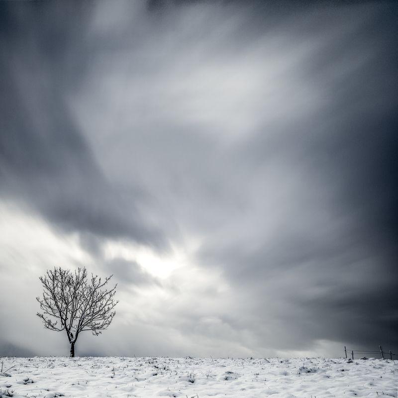 tree,winter,long exposure,minimalismus,sky alone treephoto preview