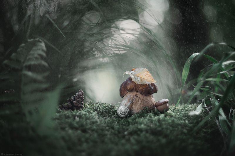 украина, коростышев, таинственные миры, гармония, загадочный, лето, лес, дождь, природа, красота, макро, макро мир, макро-красота, макро истории, цвета, зеленый, улитка, шишка, умиротворение, лесная сказка, вечер, боке, трава, мох, \