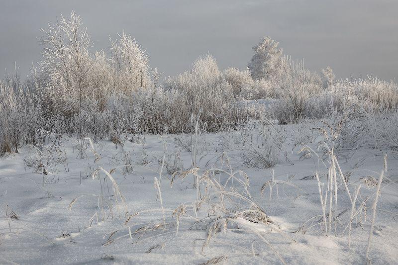 иней мороз свет Морозноphoto preview
