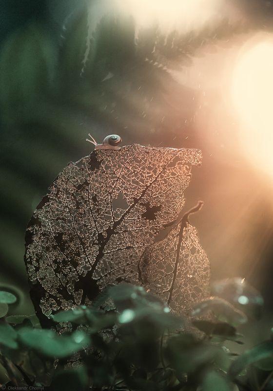 украина, коростышев, лето, лес, макро, Хрупкость бытияphoto preview