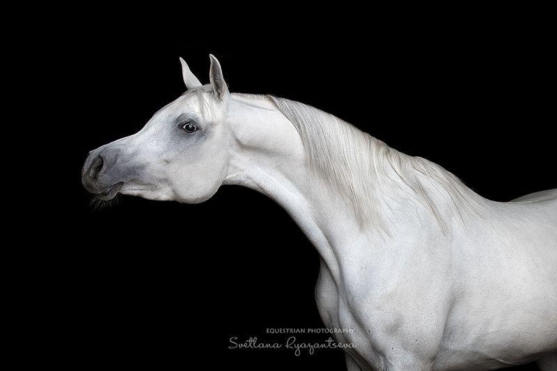 horse, лошадь, лошади, portrait Romy Cassphoto preview