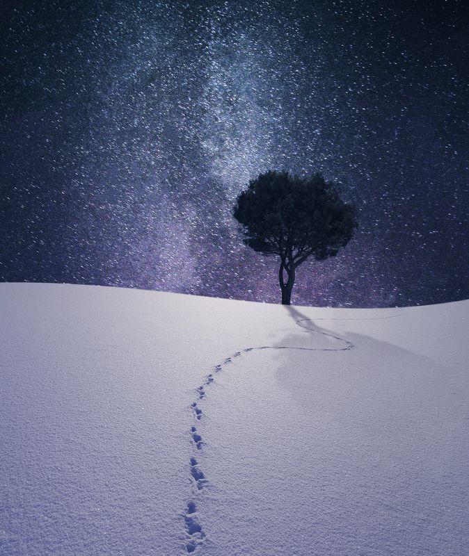 Lithuania, night, tree, sky, milky way, snow, winter *photo preview