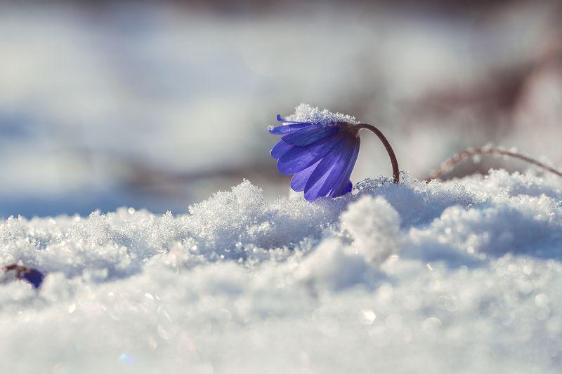 зима  пришла на Кубань...photo preview