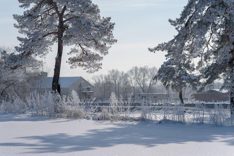 зима,природа,сосны,тени,красота,февраль,россия,пейзаж \
