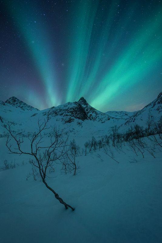norway night aurora borealis landscape snow winter senja  krokelvvatnet Iphoto preview