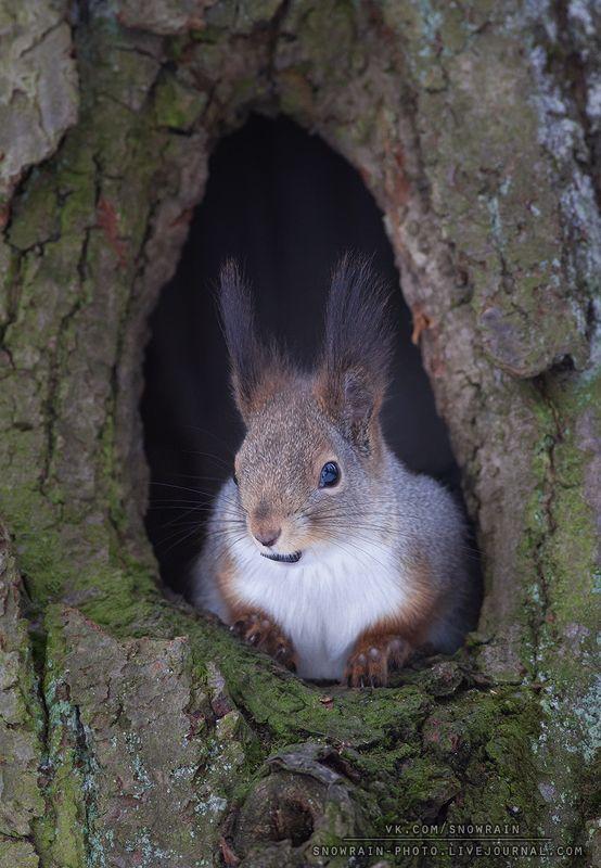белка, фотоохота, анималистика, дикая природа, природа, лес, животные, nature,wildlife, squirrel, animal Из окошкаphoto preview