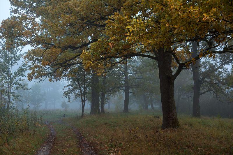 пейзаж,утро,рассвет,осень,туман,собака,дубы,россия \
