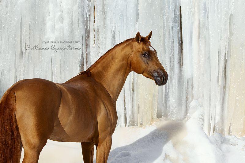 horse, лошадь, лошади, portrait Fairytalephoto preview