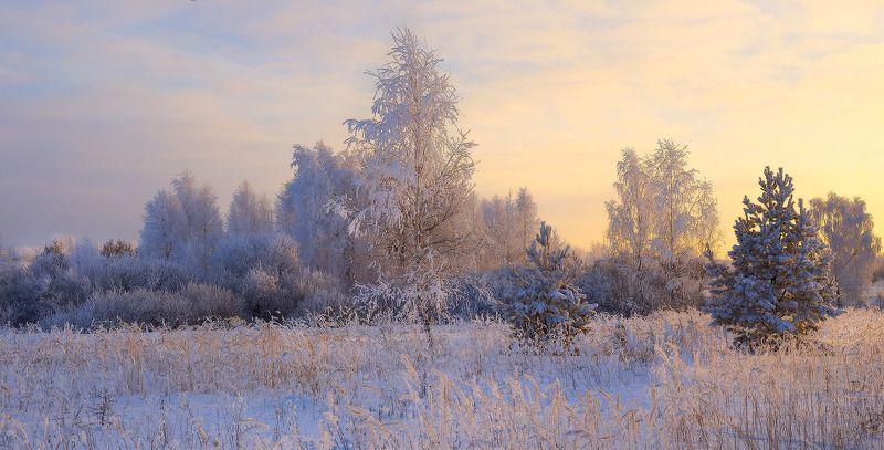 зима мороз иней утро Светаетphoto preview