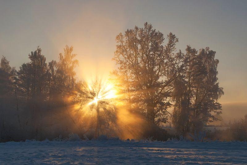 утро, туман, солнце, свислочь Утро начинается не с кофе...photo preview