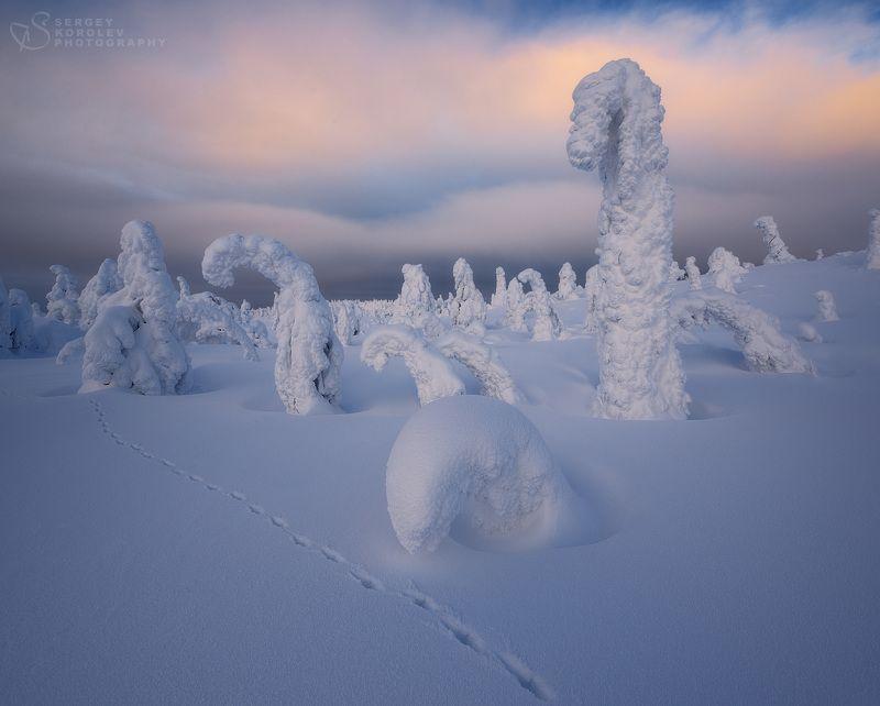 Снежные историиphoto preview