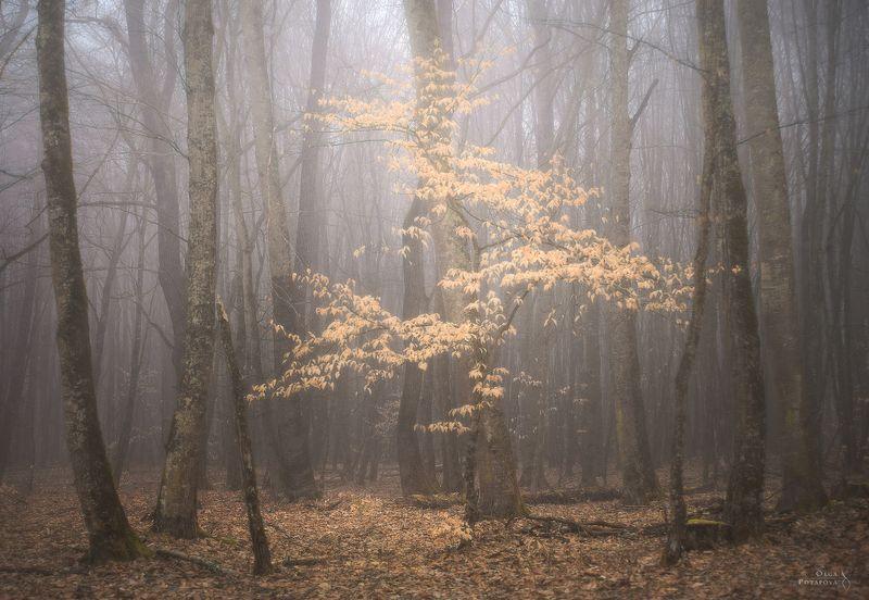 лес, осень, карачаево-черкессия, кчр, туман Затерянный во времениphoto preview