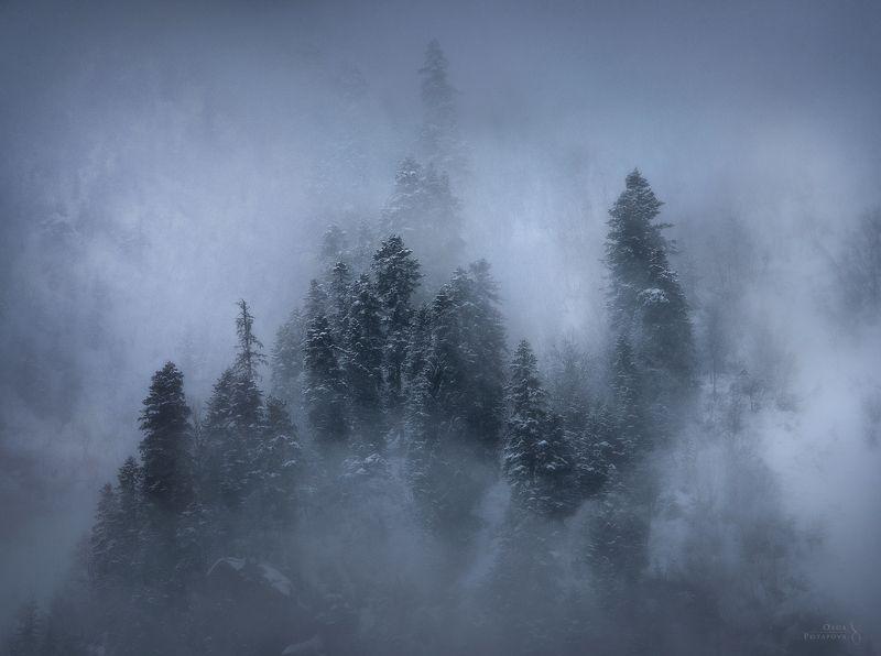 туман, кчр, домбай, горы, мистика, зима, кавказ, пихты Видения зимыphoto preview