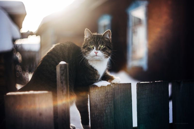 зима, кот, гелиос Котейкаphoto preview