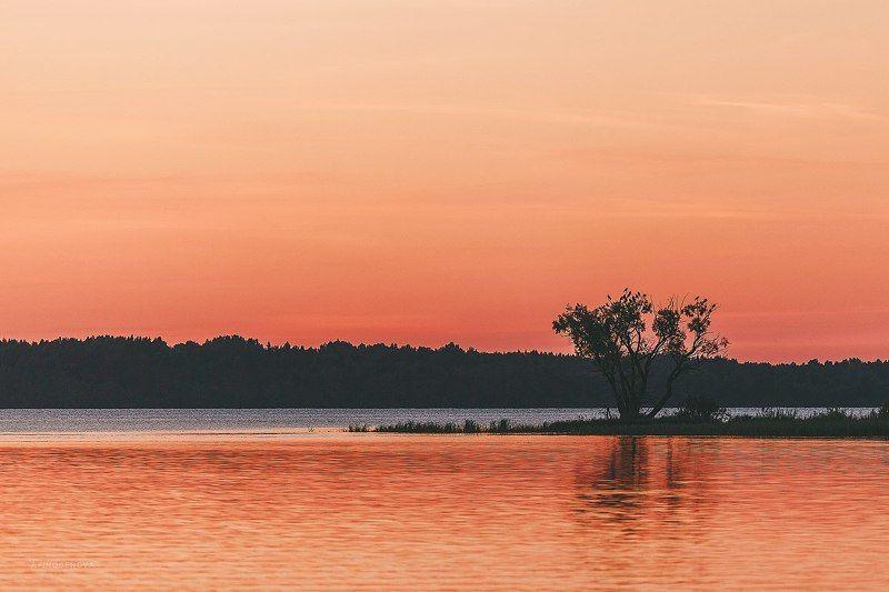 вечер, закат, лето, озеро, отражение, дерево На закате дняphoto preview