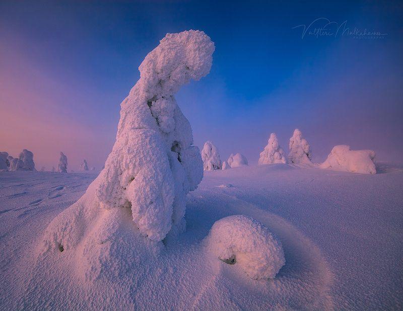 Уставший страж зимыphoto preview