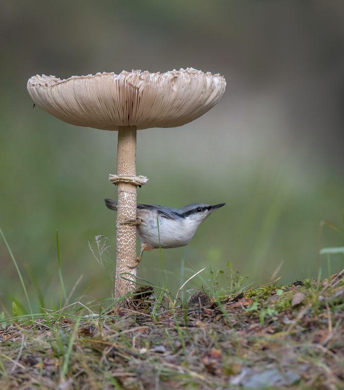 природа,лес,грибы,лето В стране больших грибовphoto preview