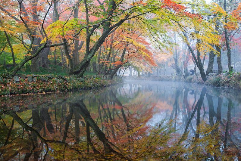 foliage, mysterious, autumn,  reflection Mystic autumn morningphoto preview