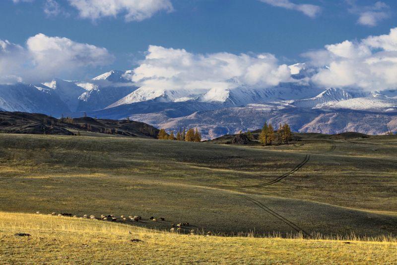 алтай, горный алтай, курай, северо-чуйский хребет,осень, горы На горизонте горы в облакахphoto preview
