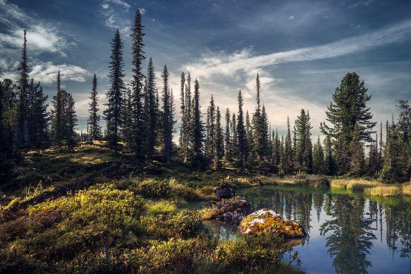 landscape, nature, taiga, lake, forest, rocks, cold, spectacular, пейзаж, природа, тайга, лес, глухая, красивая, озеро, камни, холодное, pure, transparent, morning, moss, чистое, прозрачное, утро, мох, siberia, ergaki, сибирь, ергаки, красноярский край Таежное озерцо / Tiny taiga lakephoto preview