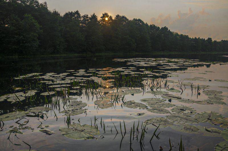 Александр Березуцкий, пейзаж, озеро, вечер Вечер на озере Старая речкаphoto preview