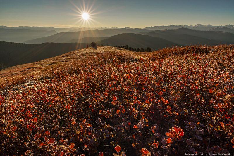 алтай, сибирь, березка, осень, солнце Начало осениphoto preview