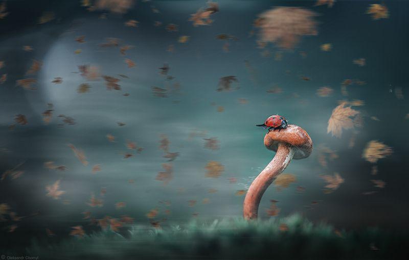 украина, коростышев, природа, лес, таинственные миры, вдохновение,  гармония, макро, макро истории, макро мир, Путешествие в неизвестностьphoto preview
