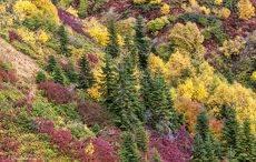 Яркие краски осени в горах