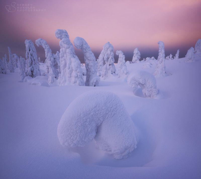 кольскийполуостров, кольский, Зимовье горных обитателейphoto preview