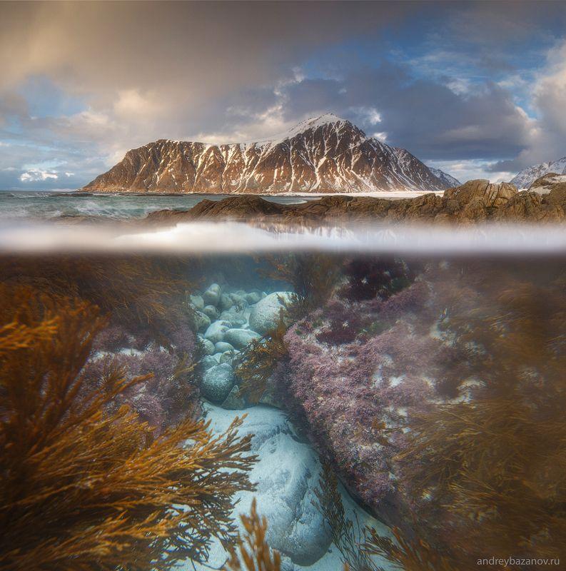 Подводный мир Лофотенских острововphoto preview