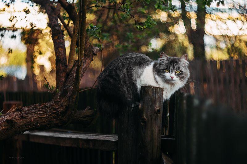 животные, коты, кот, гелиос Назаборные котыphoto preview