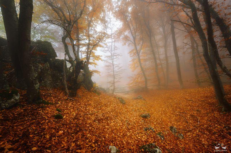 Осенними тропамиphoto preview