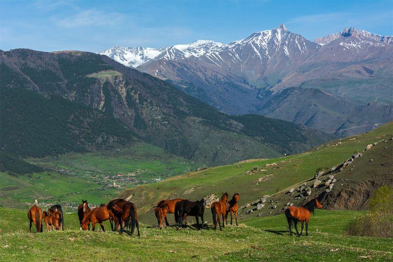 природа, пейзаж, кавказ, горы, весна, вечер, панорама, закат, солнце, небо, облака, свет, животные, лошади ***photo preview