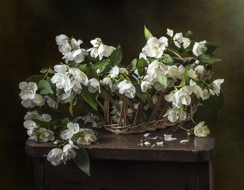натюрморт, цветы, still life Цветы жасминаphoto preview