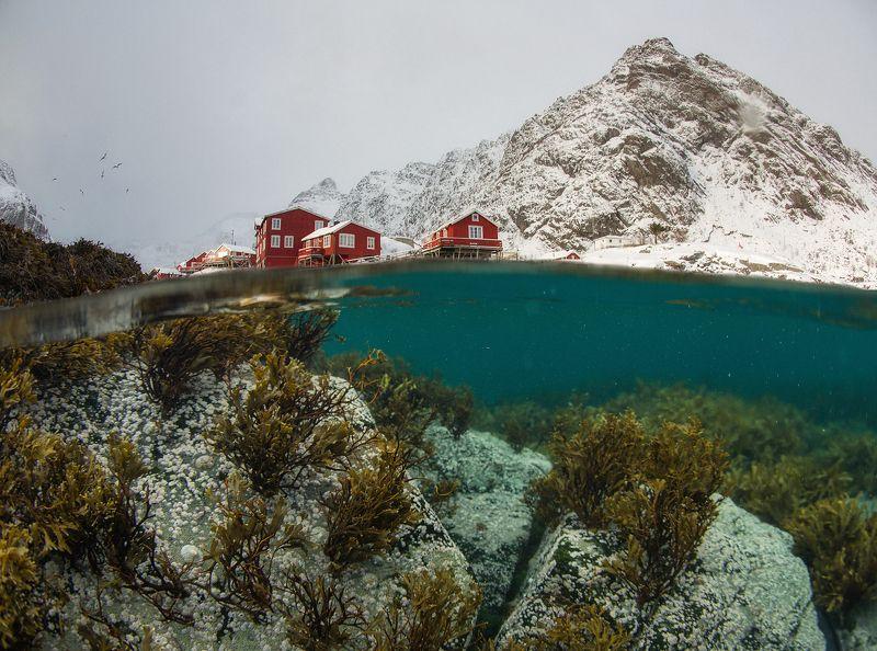 norway, lofoten, underwater, winter Two Worlds. Underwater Lofoten.photo preview