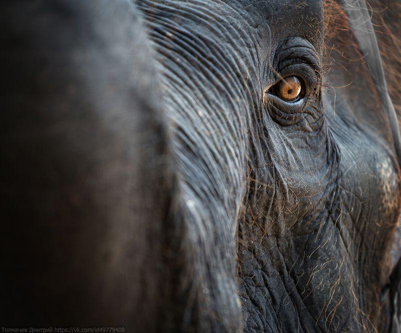 толмачев дмитрий, слон, путешествия ***photo preview