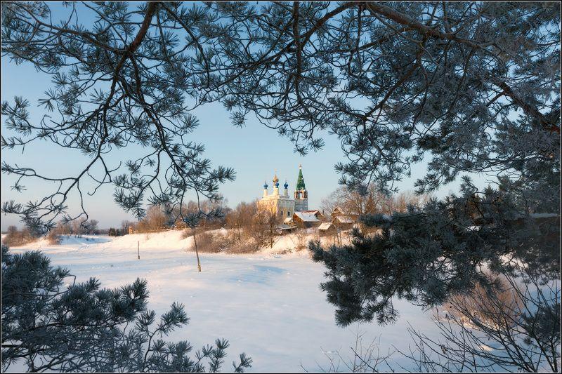 россия, ивановская обл, горицы Среди сосновых ветокphoto preview