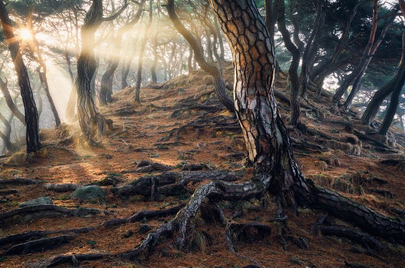 Roots of Timephoto preview
