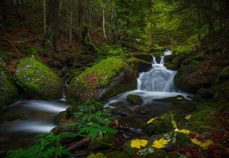landscape nature autumn scenery forest wood mountain vitosha bulgaria осень river Breeze of autumnphoto preview