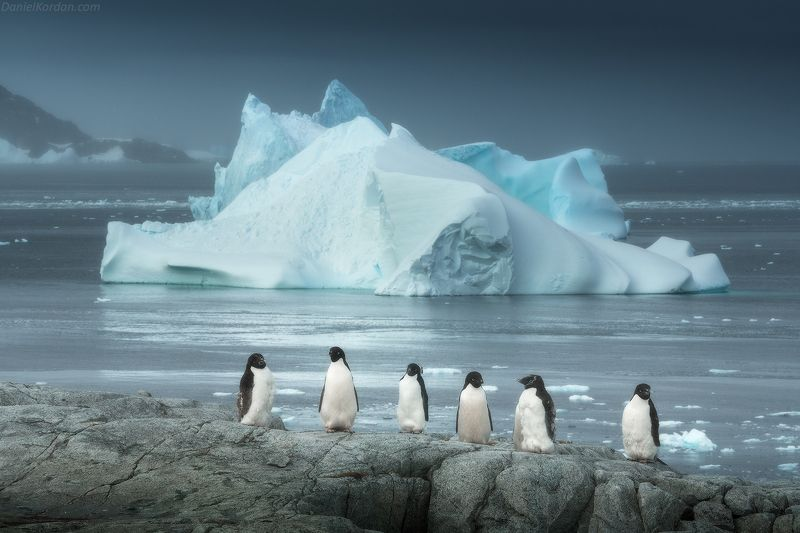 антарктида Дружным рядомphoto preview