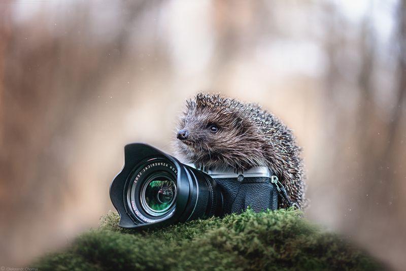 украина, коростышев, природа, еж, фотоаппарат, лес, макро, макро истории, В поисках чудесногоphoto preview
